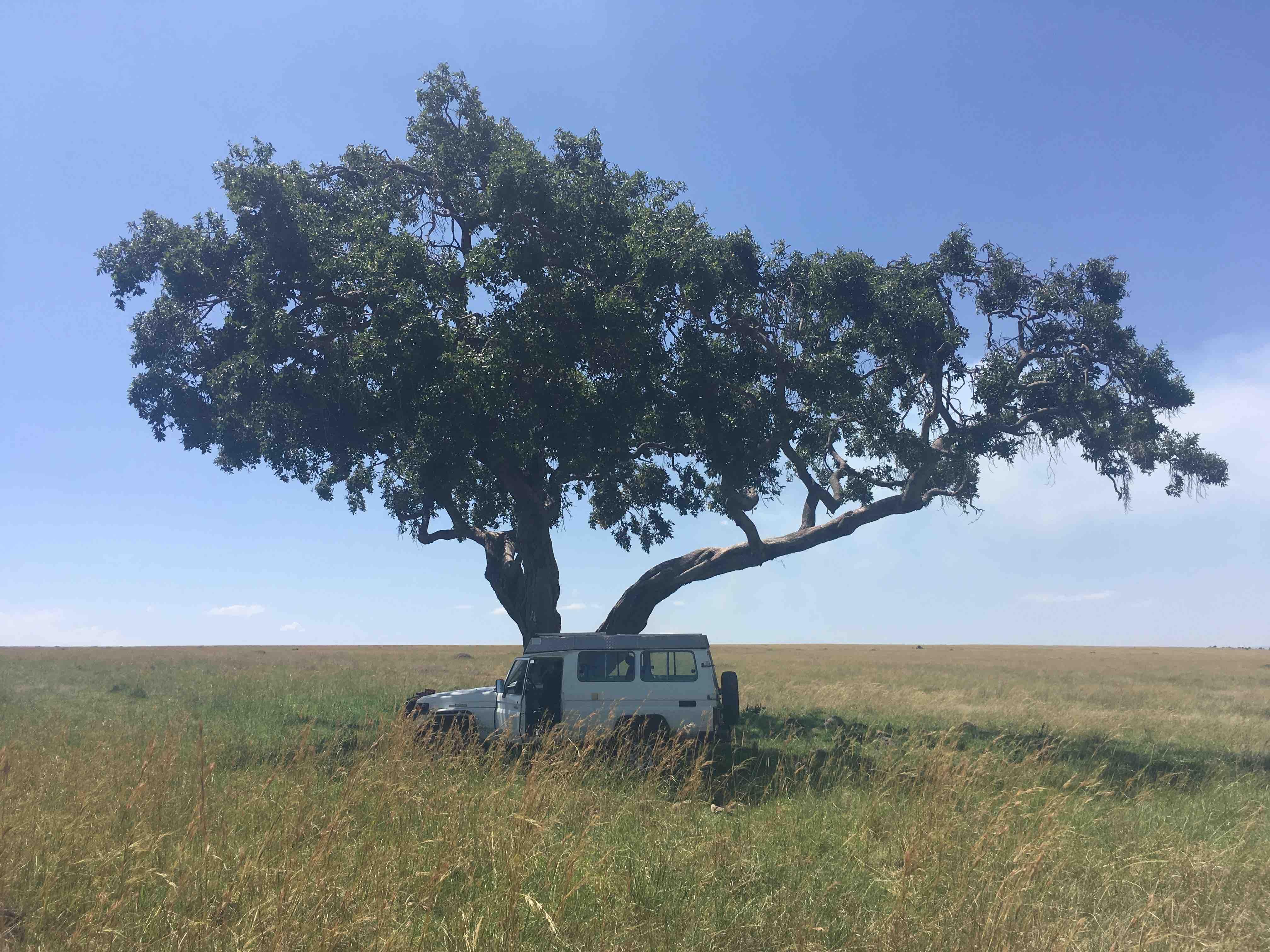 einzelbaum.jpg