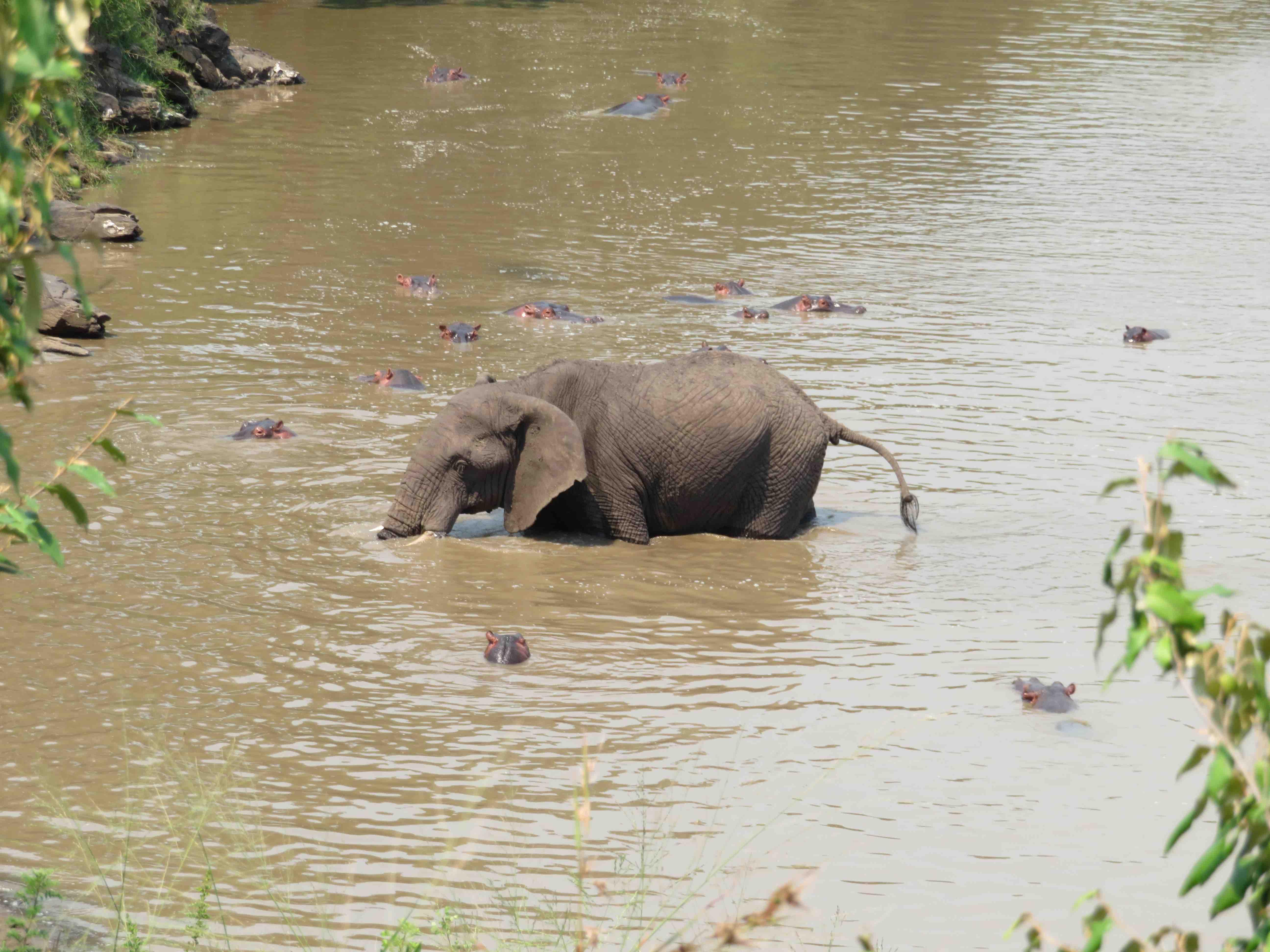 hippoelefant.jpg